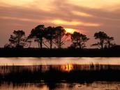 The Roanoke's Ecosystem
