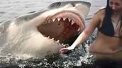 Do people survive survive shark attacks