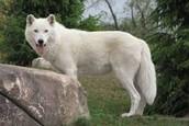 Animals of Tundra