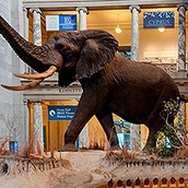 Smithsonian National Musem of Natural History