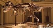 Dinosaurs - T-rex