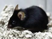 mice photograph