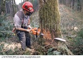 Cutting down trees