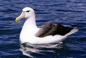 10 - El albatros