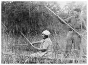 People gathering wild rice