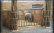 Animal abuse in zoos
