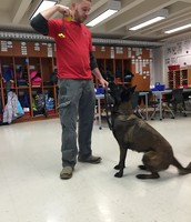 1st Grade- Dog Trainer