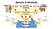These Are Different Ways Biomass Forms