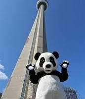 Even pandas love this tower