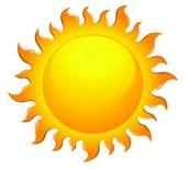 Sun to plant (plantae)