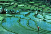 The Shang Dynasty attached great importance to agriculture.