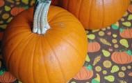 Favior Pie Pumpkins