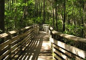 Brazons Bend Texas State Park