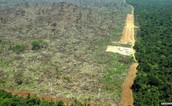 Picture of Deforestation