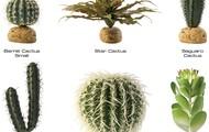 Desert plants