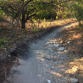 Arbor Hills Trails in Plano