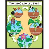 Understanding the Plant Life Cycle
