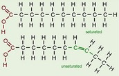 Saturated Fat; Unsaturated Fat