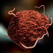 Mumps virus 3d Model