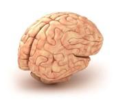 פעילות בעקבות ההרצאה על התחדשות תאי מוח