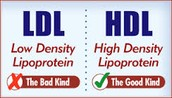 What Is LDL & HDL?