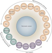cell signaling pathway groups