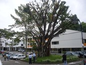 Technological University of Pereira.