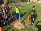 Two beautiful trees planted for our GES Angels.