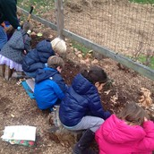 Planting Flower Bulbs!