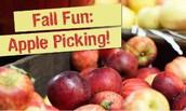 New England Apple-Picking