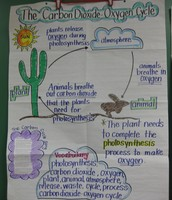I can identify the importance of the carbon dioxide – oxygen cycle to the survival of plants and animals.