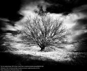 Poe'tree'