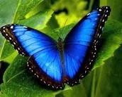 Butterfly - Bilateral Symmetry