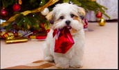 This dog is ready for Christmas!