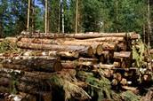 השמדת יערות