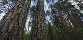 Красота Водлозерского леса