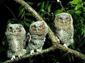 where owls live.