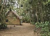 Native Cabin