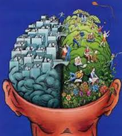 HEMISPHERICITY: anatomy of our brains divided into left & right hemispheres.