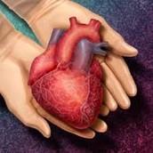 ¿que es la donación de órganos ?