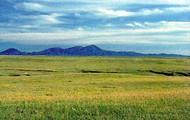 3 type of  grassland