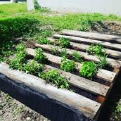 Low Tech: #Pallet Garden Project