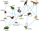 Basic Food Web