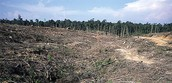 Forests being destroyed