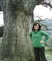 de árbol en árbol
