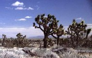 The Mohave Desert