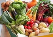 vegatablel's