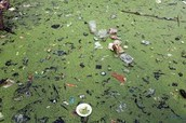 Trash in Rivers of Illinois