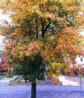 Secondary Tree