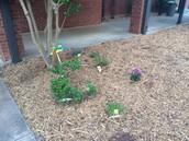 Second Grade Garden 1